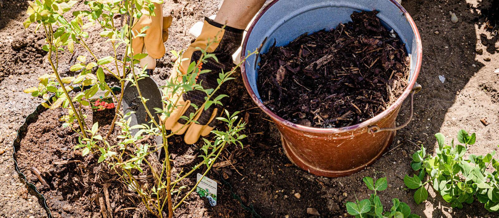 Pflanzanleitung für Sträucher und Bäume